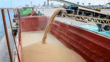 نقل القمح